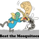 beat the mosquitoes
